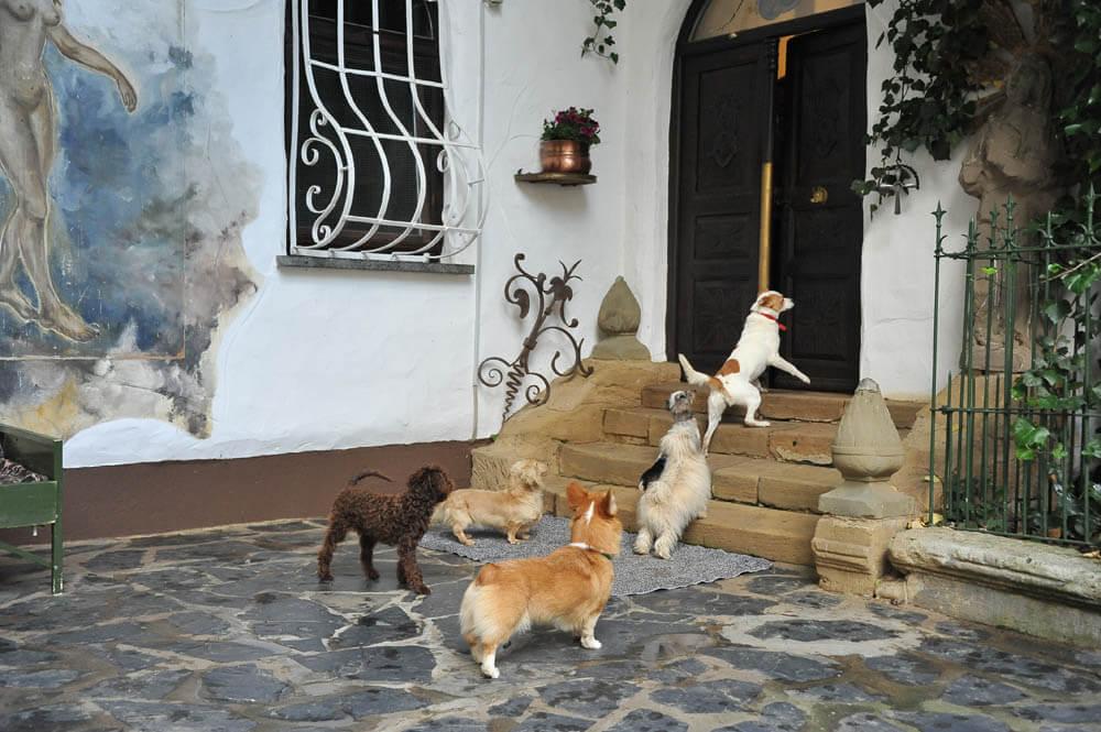 Hunde vor Eingangstür der Keimzelle